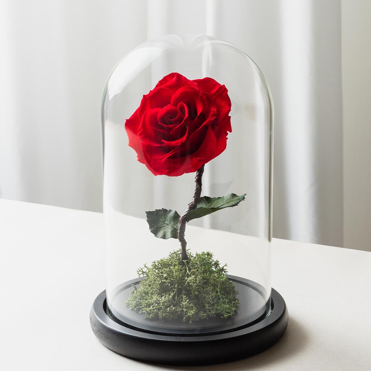 紅色永生花開幕盆栽,開幕盆栽推薦,永生花紅色